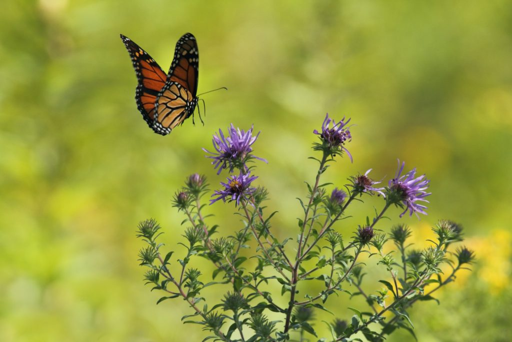 how to garden for wildlife - growing flowers for bees