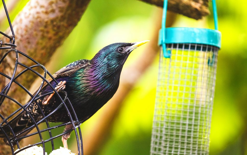how to garden for wildlife - providing food for birds
