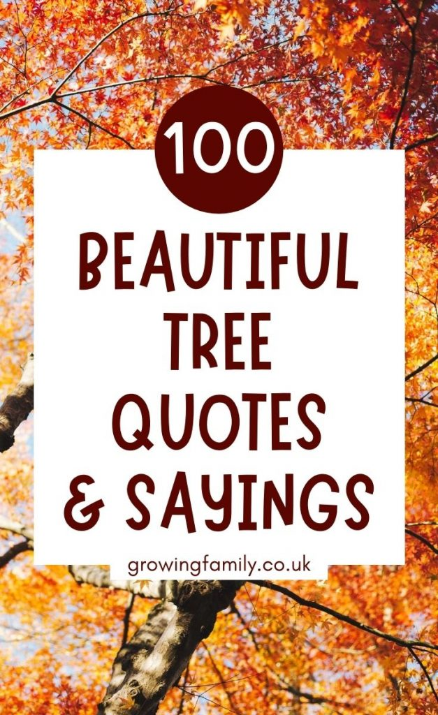 Looking for the best tree quotes, forest quotes or tree captions? This handy list has 100 uplifting, inspiring and funny quotes about trees.