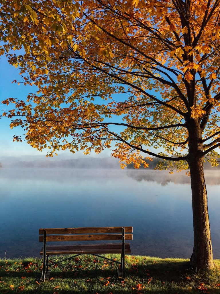 tree and bench overlooking lake