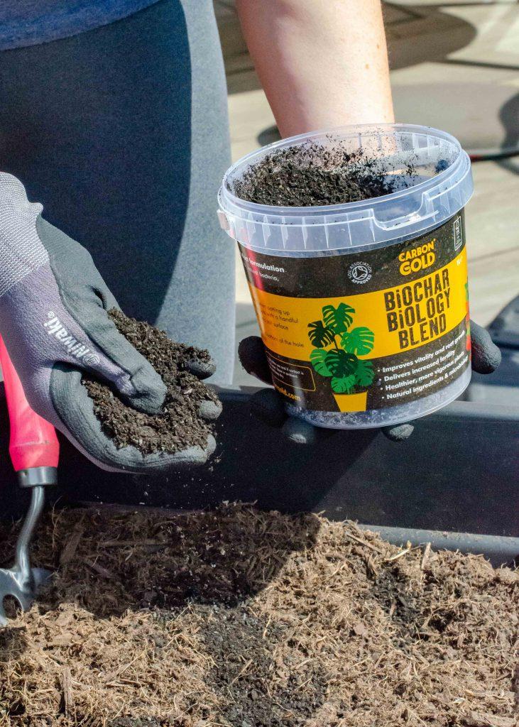 sprinkling carbon gold biochar biology blend onto compost