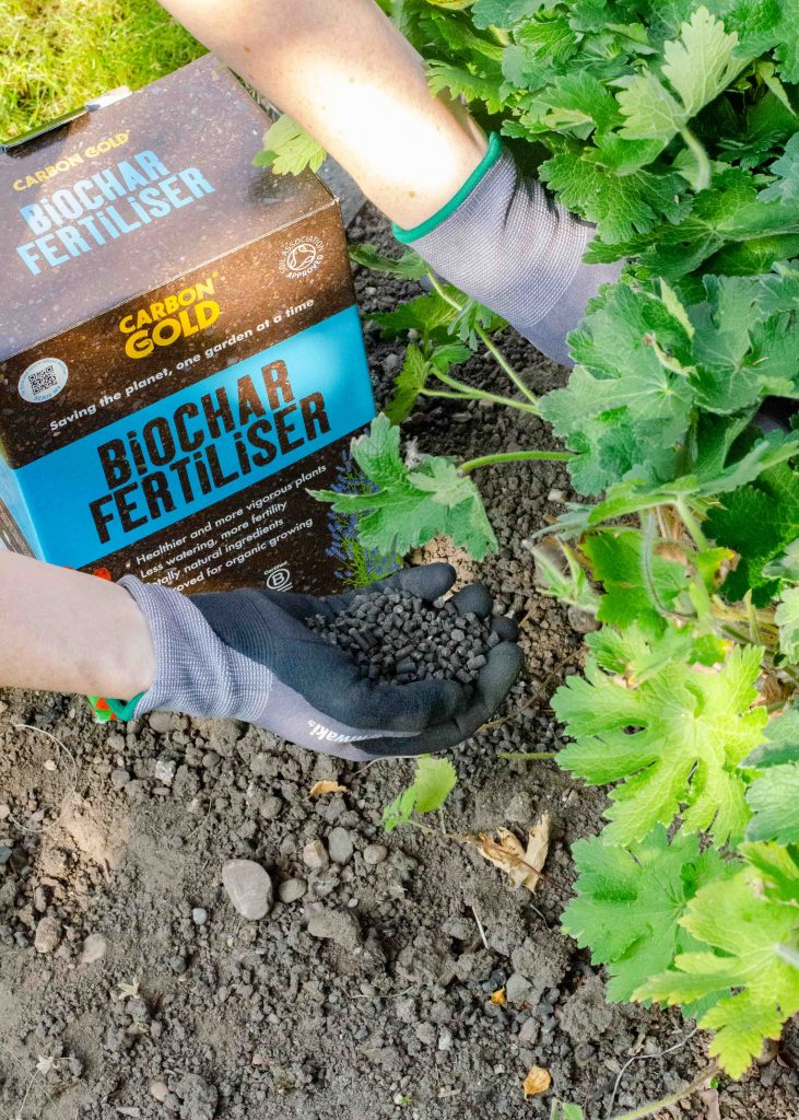 adding carbon gold biochar fertiliser to garden soil