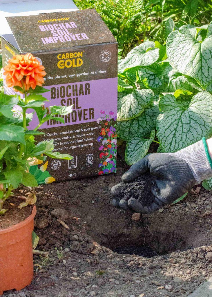 adding carbon gold biochar soil improver to garden soil