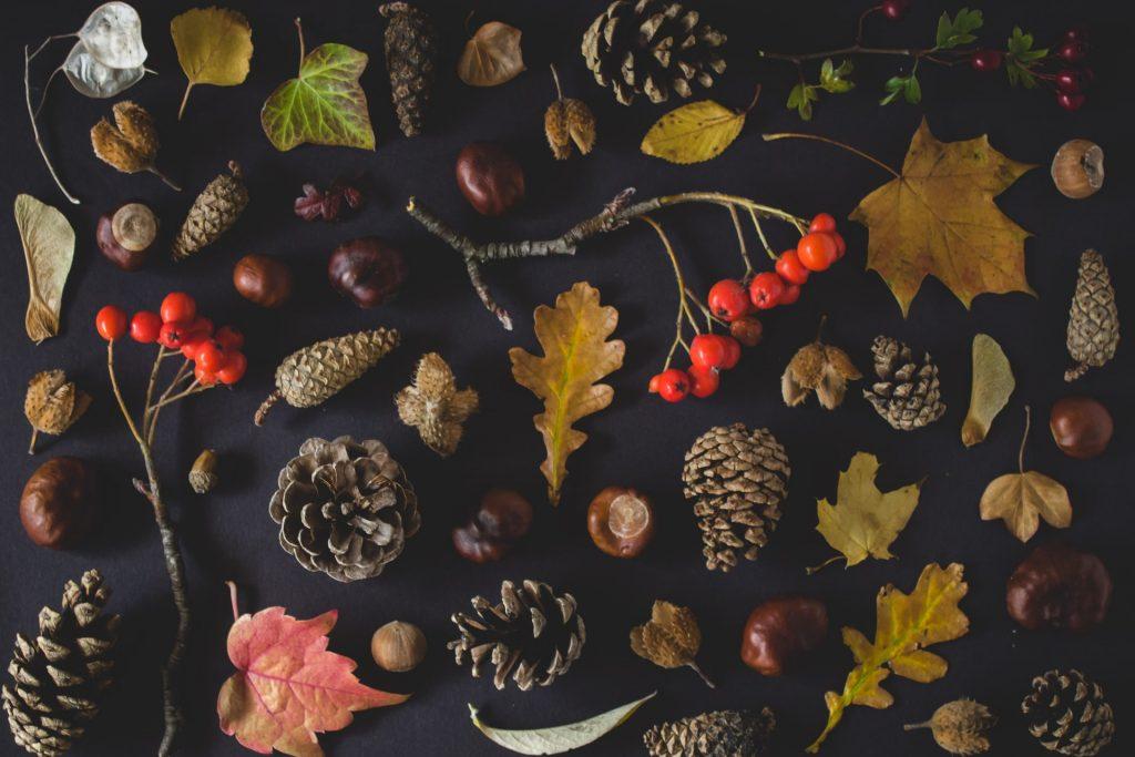 autumn nature treasures