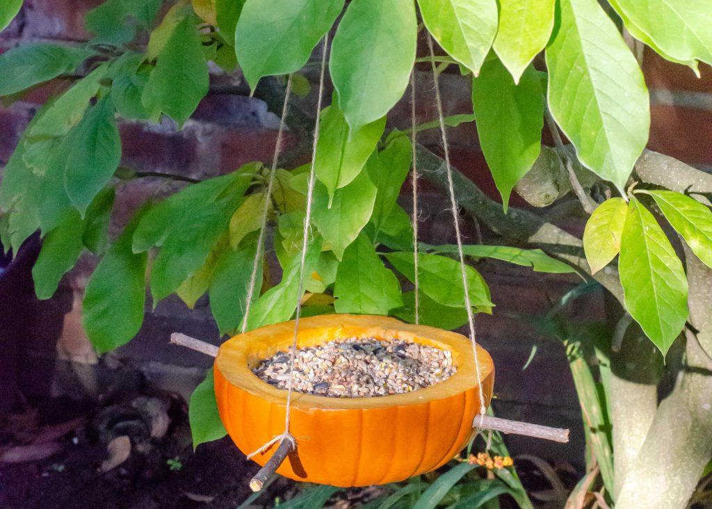 hollowed out pumpkin bird feeder