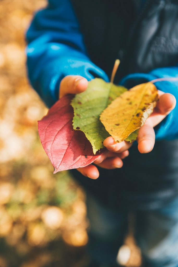 child's hands holding autumn leaves